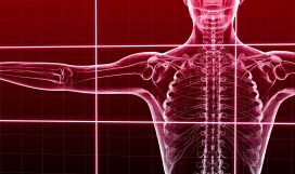 Basic Musculoskeletal Considerations in Occupational Anatomy and Physiology